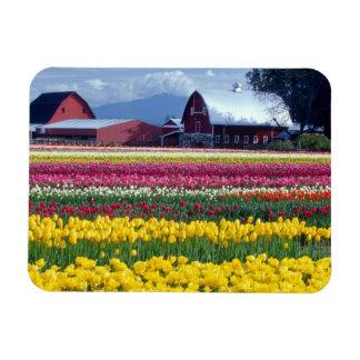 Campo de exhibición del tulipán imán flexible