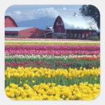 Campo de exhibición del tulipán pegatina cuadrada