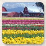 Campo de exhibición del tulipán posavaso