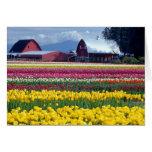 Campo de exhibición del tulipán tarjeta de felicitación