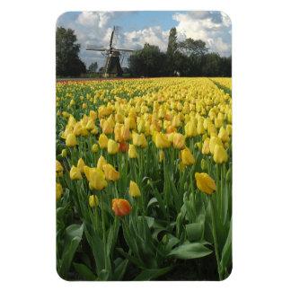 Campo de flor amarillo del tulipán Holanda Imán De Vinilo