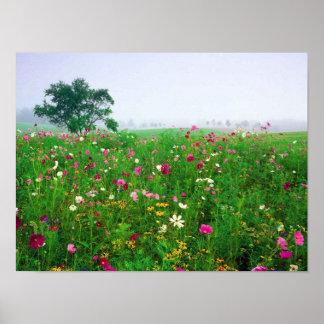 Campo de flor de Kentucky Poster