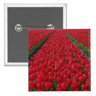 Campo de flor de tulipanes, Países Bajos, Holanda Pin