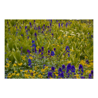 Campo de flor póster