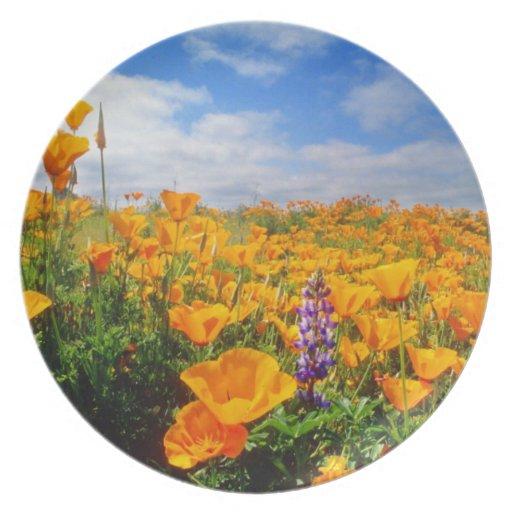 Campo de flores amarillas platos