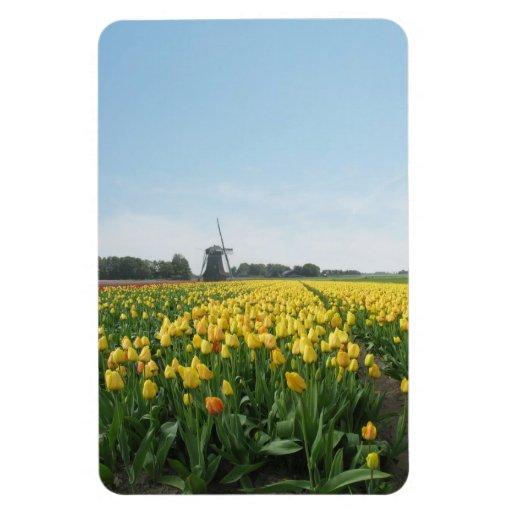 Campo de flores de los tulipanes y molino de vient imán rectangular