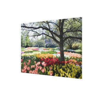 Campo de flores en una mañana de la primavera impresión en lona estirada