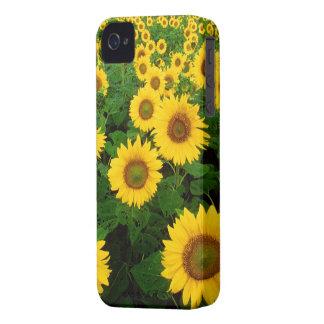 Campo de girasoles iPhone 4 Case-Mate carcasa