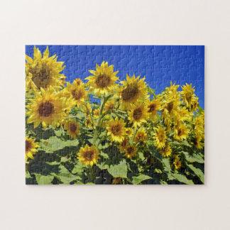 Campo de girasoles puzzles con fotos