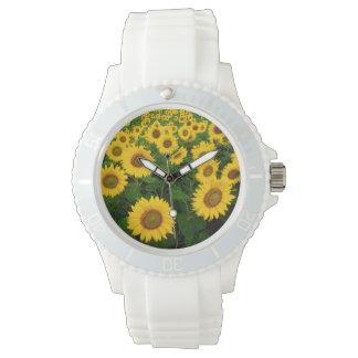 Campo de girasoles reloj de mano