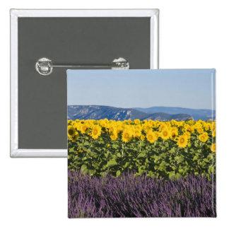 Campo de girasoles y de flores de la lavanda pin