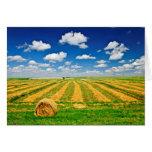 Campo de granja del trigo en la cosecha felicitaciones