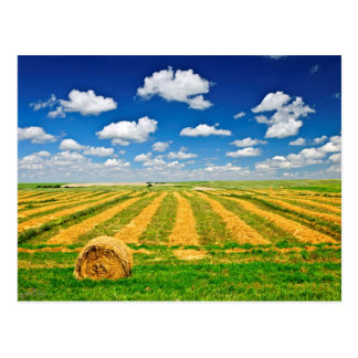 Campo de granja del trigo en la cosecha postal