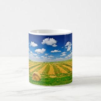 Campo de granja del trigo en la cosecha taza básica blanca