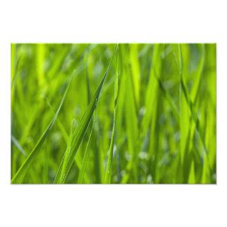 Campo de hierba verde cojinete