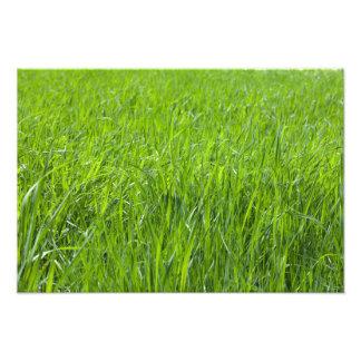 Campo de hierba verde fotografía