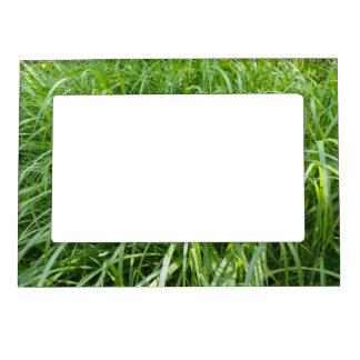 Campo de hierba verde marcos magneticos para fotos