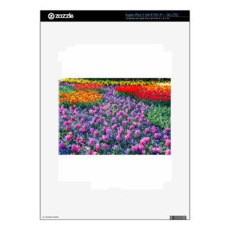 Campo de jacintos rosados y de tulipanes rojos pegatinas skins para iPad 3