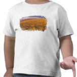 Campo de la cebada de maduración a lo largo de camiseta