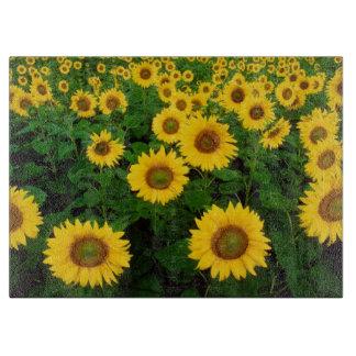 Campo de la flor amarilla de los girasoles tablas para cortar