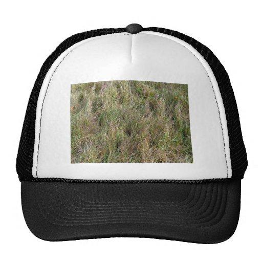 Campo de la hierba seca parcial gorro