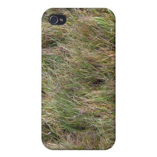 Campo de la hierba seca parcial iPhone 4 carcasa