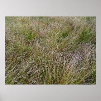 Campo de la hierba seca y del seto amarillos poster