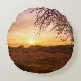 Campo de la lavanda del otoño en puesta del sol