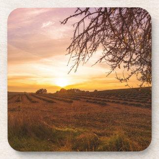 Campo de la lavanda del otoño en puesta del sol posavaso