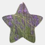Campo de la lavanda pegatina en forma de estrella