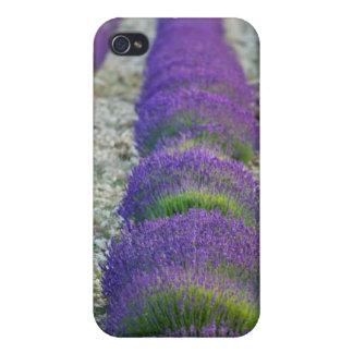 Campo de la lavanda, Provence, Francia iPhone 4 Carcasa