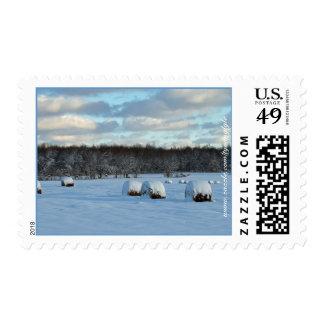 Campo de la mañana del invierno de las balas de sello