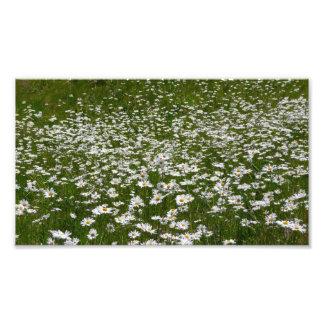 Campo de la naturaleza blanca de las margaritas fotografía