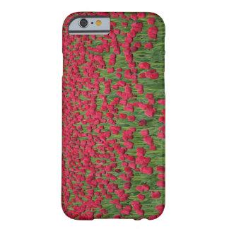 Campo de la primavera de la caja roja del iPhone Funda Barely There iPhone 6