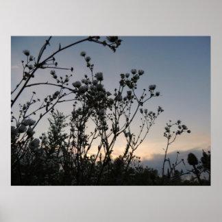 Campo de la puesta del sol de flores salvajes póster