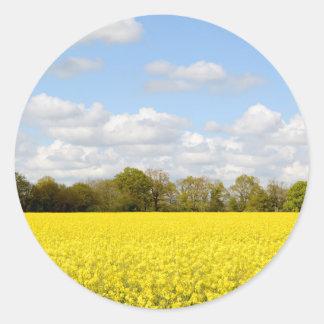 Campo de la rabina amarilla
