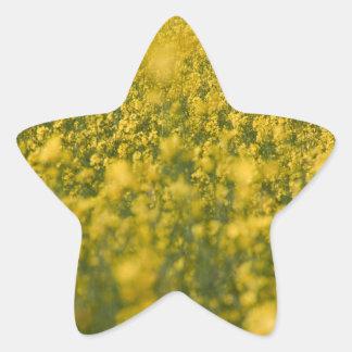 Campo de la rabina pegatina en forma de estrella