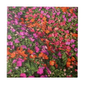Campo de las flores anaranjadas rosadas púrpuras d azulejo cuadrado pequeño