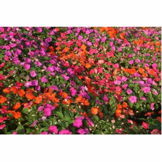 Campo de las flores anaranjadas rosadas púrpuras d esculturas fotográficas