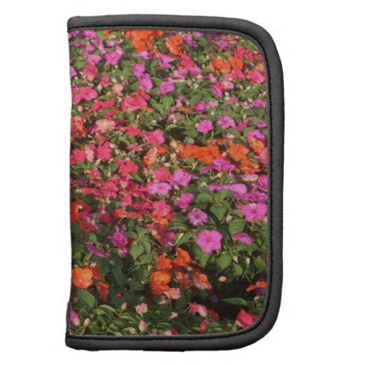 Campo de las flores anaranjadas rosadas púrpuras d planificadores