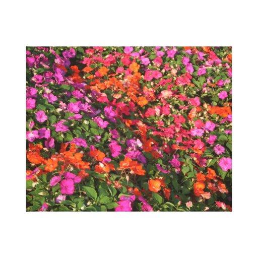 Campo de las flores anaranjadas rosadas púrpuras d lona envuelta para galerias