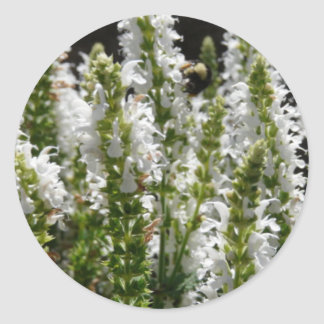 Campo de las flores blancas de la lavanda en campo pegatina redonda