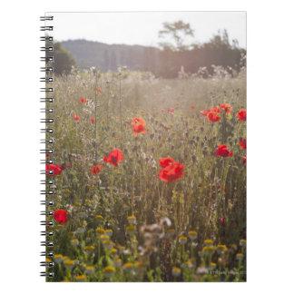 Campo de las flores de la amapola cuaderno