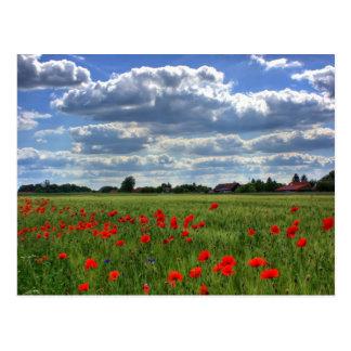 Campo de las flores de la amapola postales
