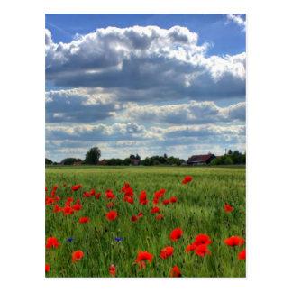 Campo de las flores de la amapola postal