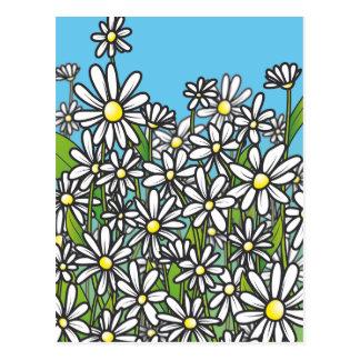Campo de las flores de la margarita blanca postal