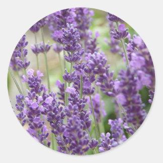 Campo de las flores púrpuras de la lavanda etiquetas redondas