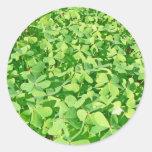 Campo de las hojas verdes del trébol etiquetas redondas