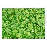 Campo de las hojas verdes del trébol tarjeton
