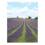 Campo de Lavendel en la Provence Postal